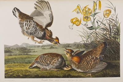 Illustration from 'Birds of America', 1827-38 (Hand-Coloured and Aquatint)-John James Audubon-Giclee Print