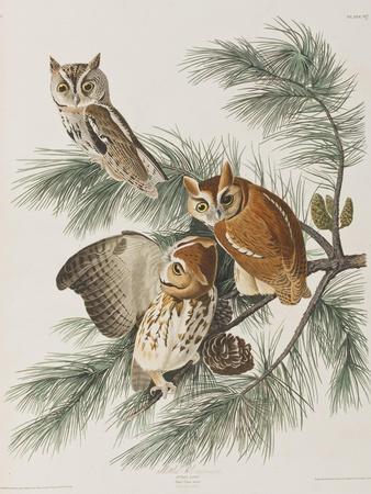 https://imgc.artprintimages.com/img/print/illustration-from-birds-of-america-1827-38_u-l-prdwhq0.jpg?p=0