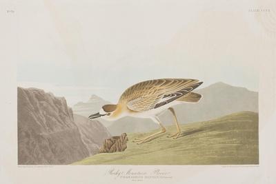 https://imgc.artprintimages.com/img/print/illustration-from-birds-of-america-1827-38_u-l-prdxjq0.jpg?artPerspective=n