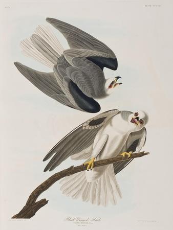 https://imgc.artprintimages.com/img/print/illustration-from-birds-of-america-1827-38_u-l-prdyhb0.jpg?p=0