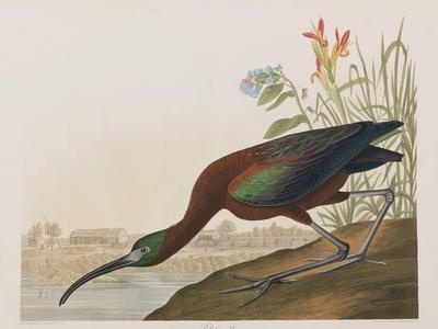 https://imgc.artprintimages.com/img/print/illustration-from-birds-of-america-1827-38_u-l-prdz1f0.jpg?p=0