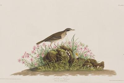 https://imgc.artprintimages.com/img/print/illustration-from-birds-of-america-1827-38_u-l-prdzik0.jpg?artPerspective=n