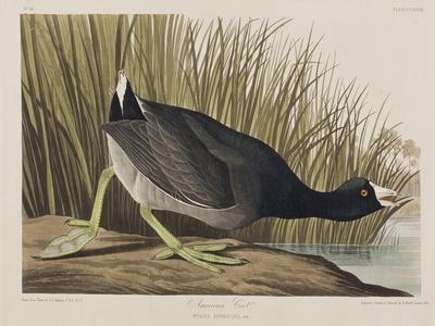 https://imgc.artprintimages.com/img/print/illustration-from-birds-of-america-1827-38_u-l-pre2tj0.jpg?p=0