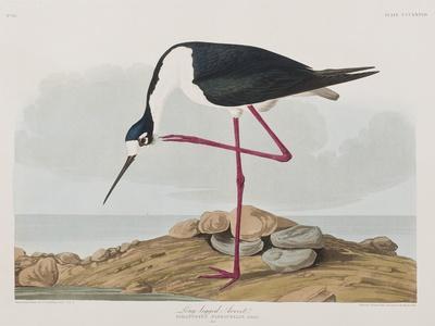 https://imgc.artprintimages.com/img/print/illustration-from-birds-of-america-1827-38_u-l-pre3770.jpg?p=0