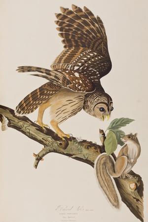 https://imgc.artprintimages.com/img/print/illustration-from-birds-of-america-by-john-james-audubon-1827-38_u-l-ppsc910.jpg?p=0