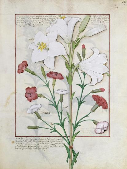 Illustration from the Book of Simple Medicines by Mattheaus Platearius-Robinet Testard-Giclee Print