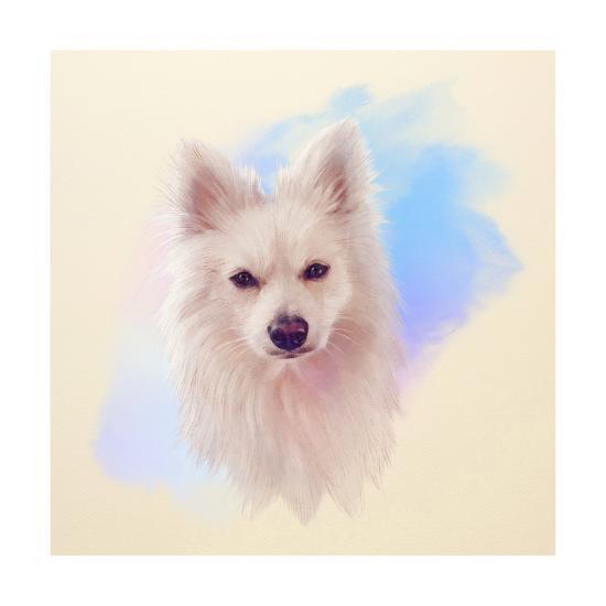 Illustration Of A Handsome White Dog Mittel German Spitz Small Dog Breeds Hand Drawn Portrait Of Art Print By Tanyazima Art Com