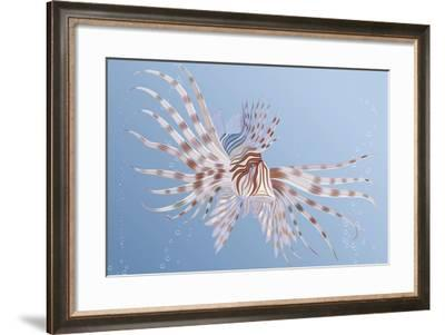 Illustration of an Exotic Lion Fish Swimming Underwater-Milovelen-Framed Art Print