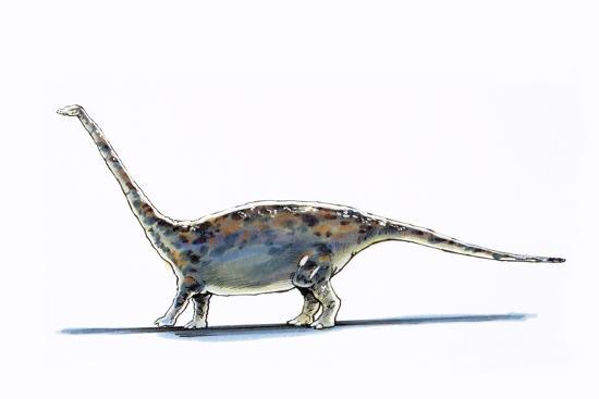 Illustration of Barapasaurus - Artwork--Giclee Print