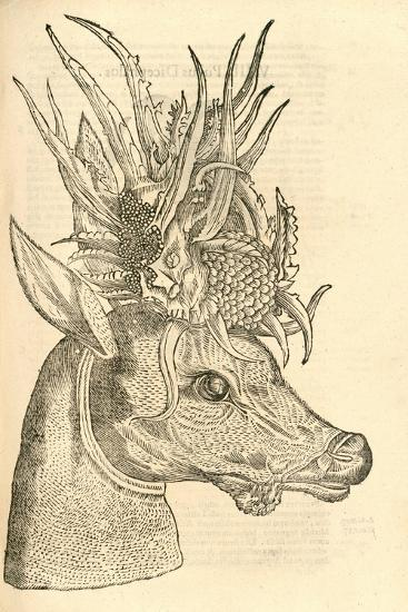 Illustration of Capreolus Polyceros from Aldrovandi's 'History of Monsters' , 1642--Giclee Print
