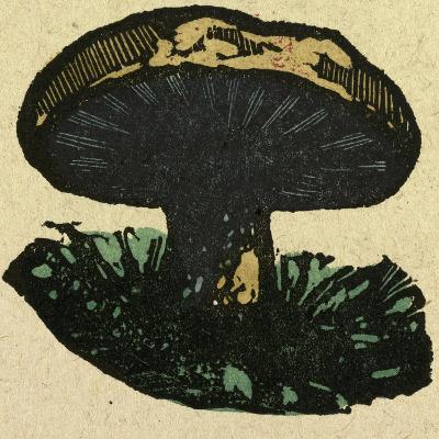 Illustration of English Tales Folk Tales and Ballads. a Mushroom--Giclee Print