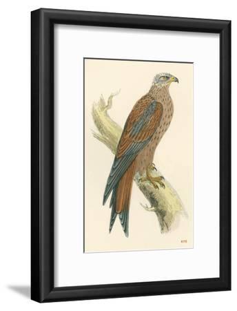Illustration of Kite on Branch