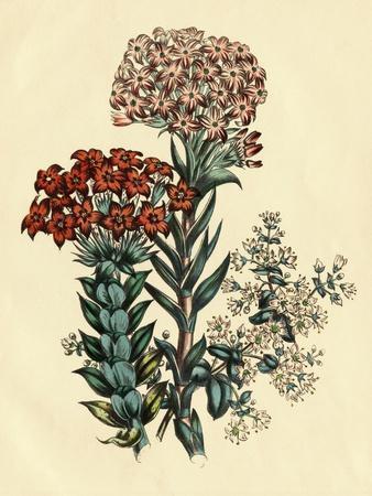 https://imgc.artprintimages.com/img/print/illustration-of-leafy-and-colorful-flowers_u-l-pf7r7g0.jpg?p=0