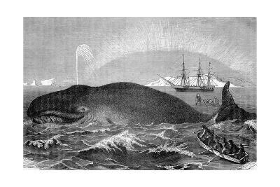 Illustration of Men Attacking Whale with Hand Harpoon--Giclee Print