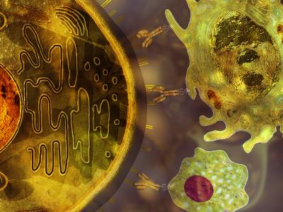 Illustration of Monoclonal Antibodies That are Made by Identical Immune Cells-Carol & Mike Werner-Photographic Print