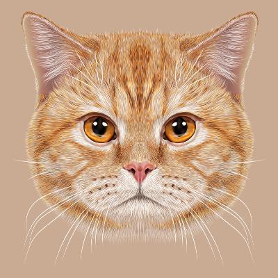Illustration of Portrait British Short Hair Cat. Cute Orange Domestic Cat with Copper Eyes.-ant_art19-Art Print