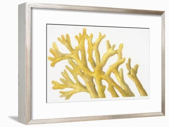 Illustration of Yellow Coral-Dorling Kindersley-Framed Photographic Print