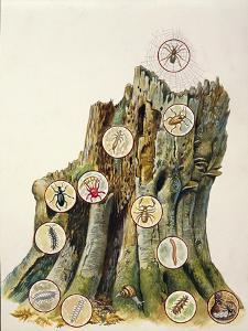 Illustration Representing Ecosystem Comprising Tree Trunk