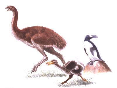 Illustration Representing Moa (Dinornithidae)--Giclee Print