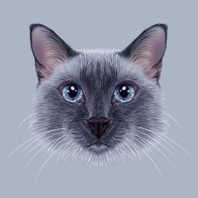 Illustrative Portrait of a Thai Cat. Cute Blue Point Traditional Siamese Cat.-ant_art19-Art Print