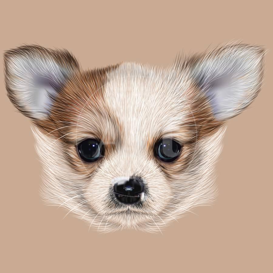 Illustrative Portrait Of Chihuahua Puppy Cute Long Hair Bi Colour