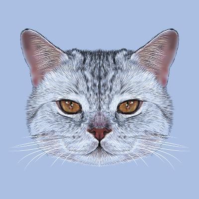 Illustrative Portrait of Scottish Straight Cat. Cute Domestic Tabby Cat with Orange Eyes.-ant_art19-Art Print