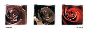 Rose Trio by Ilona Wellmann