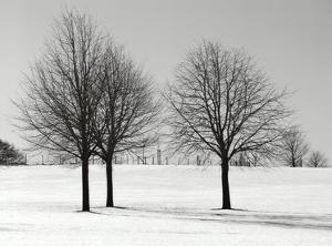 Silhouettes Of Winter I by Ilona Wellmann