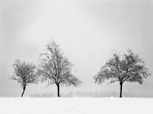 Silhouettes Of Winter II by Ilona Wellmann