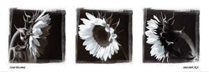 Sunflower Trio II by Ilona Wellmann