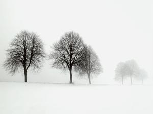 Winter Trees II by Ilona Wellmann
