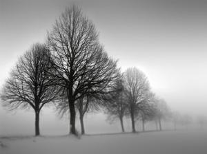 Winter Trees III by Ilona Wellmann