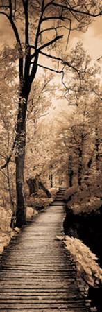 A Quiet Stroll I
