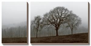 Autumn Fog by Ily Szilagyi