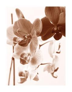 Dreamy Orchids I by Ily Szilagyi