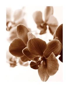 Dreamy Orchids II by Ily Szilagyi