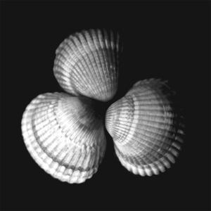 Shell Collection I by Ily Szilagyi