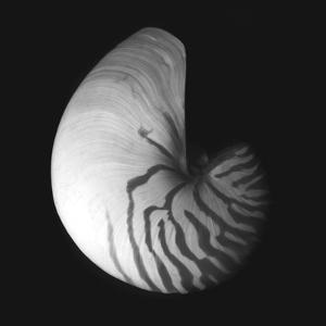 Shell Collection III by Ily Szilagyi