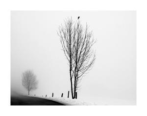 The Messenger by Ily Szilagyi