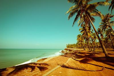 Beautiful Sunny Day at Tropical Beach with Palm Trees, Ocean Landscape in Vintage Style, India by Im Perfect Lazybones