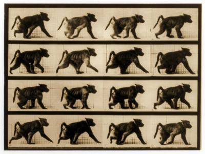Image Sequence of a Baboon Running, 'Animal Locomotion' Series, C.1887-Eadweard Muybridge-Giclee Print