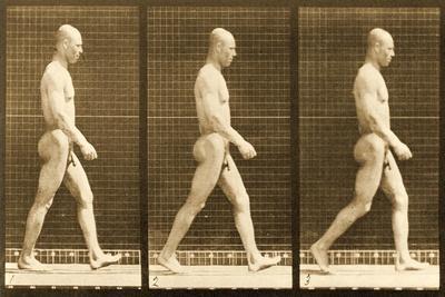 https://imgc.artprintimages.com/img/print/image-sequence-of-a-nude-man-walking-animal-locomotion-series-c-1881_u-l-puiwe90.jpg?p=0