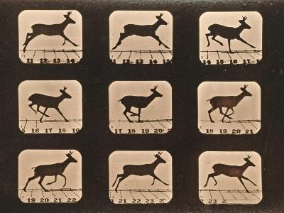 Image Sequence of a Running Deer, 'Animal Locomotion' Series, C.1881-Eadweard Muybridge-Giclee Print