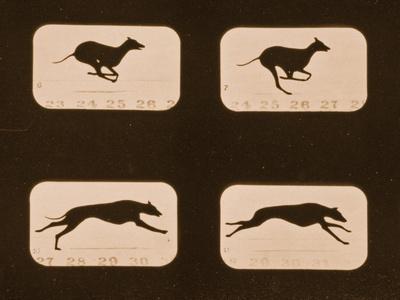 https://imgc.artprintimages.com/img/print/image-sequence-of-running-greyhounds-animal-locomotion-series-c-1881_u-l-puix4z0.jpg?p=0