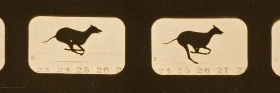 Image Sequence of Running Greyhounds, 'Animal Locomotion' Series, C.1881-Eadweard Muybridge-Giclee Print