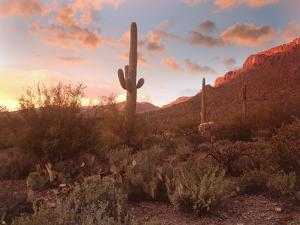 Arizona Desert by Images Etc Ltd