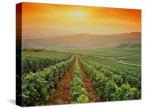 France,Champagne Vineyards near Epernay,Sunset by Images Etc Ltd