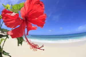 Hibiscus Flower by imagewerks
