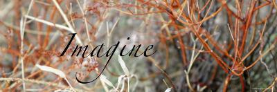 Imagine: Colorful Brush-Nicole Katano-Photo
