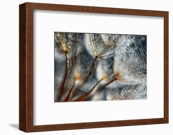 Imagine Seedlings-Ursula Abresch-Framed Photographic Print